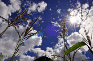 Local committees move Colombia towards climate-smart agriculture