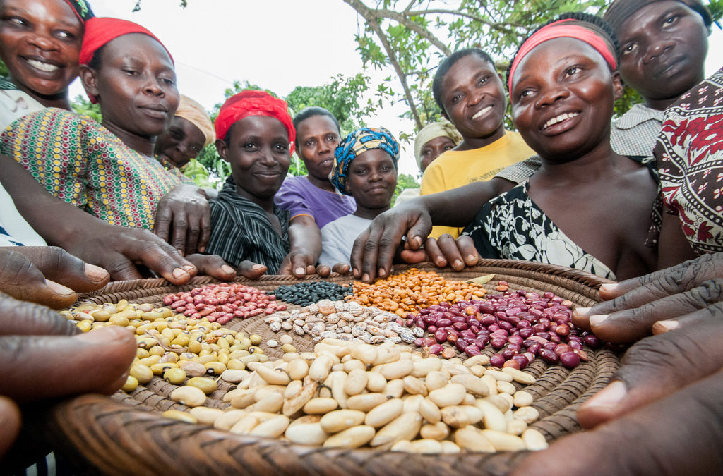 Farmers in Uganda team up with scientists to find better beans