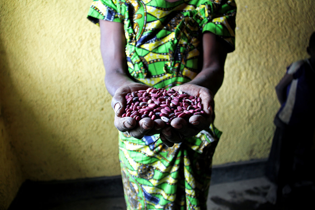 High-iron beans reduce iron deficiency in just a few months