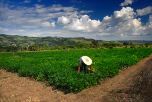 CIAT-CCAFS Science Activates Climate Adaptation in Colombia